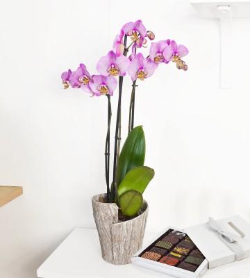 Due Orchidée et Chocolats