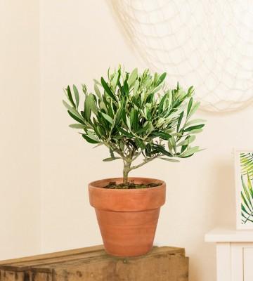 plantes vertes en ligne livraison express de plantes tendances. Black Bedroom Furniture Sets. Home Design Ideas