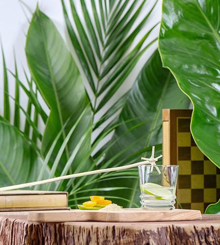 le bois lélé - un mélangeur naturel