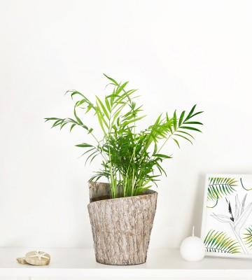 Plantes vertes en ligne livraison express de plantes for Plantes vertes en ligne