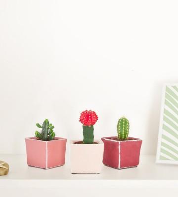 3 pots de cactus