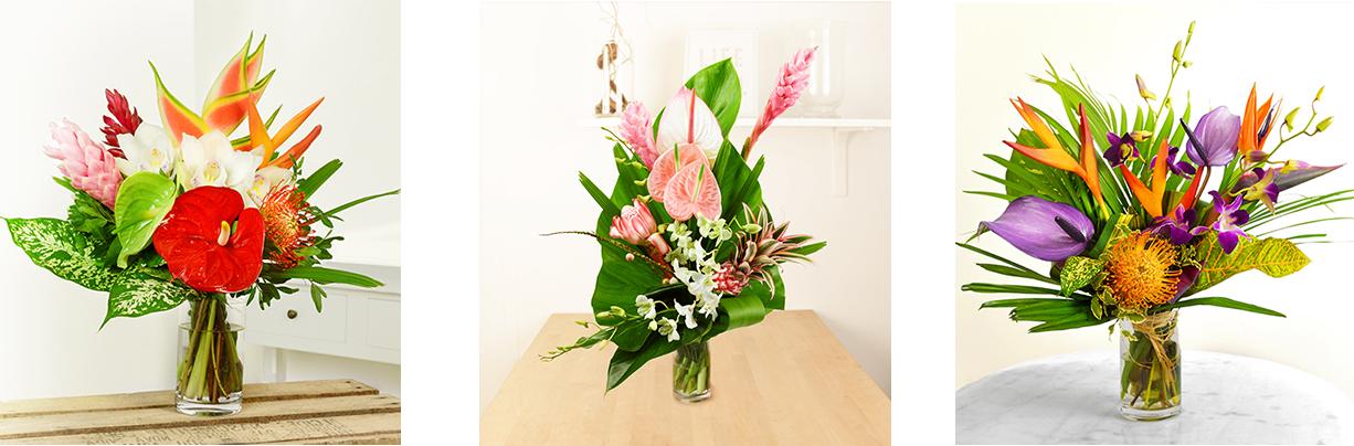 La plantation de fleurs lointaines un h ritage familial for Plantation de fleurs